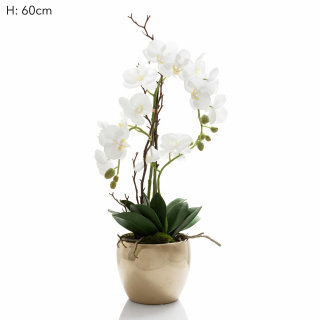 Orchid in brass pot