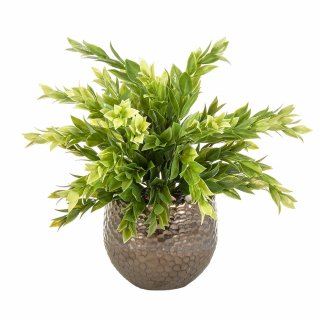 Fern in brass pot